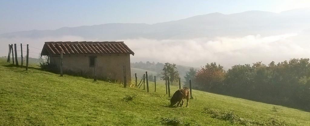 Cabane de vigne à Bessenay